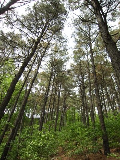 숲사진.jpg